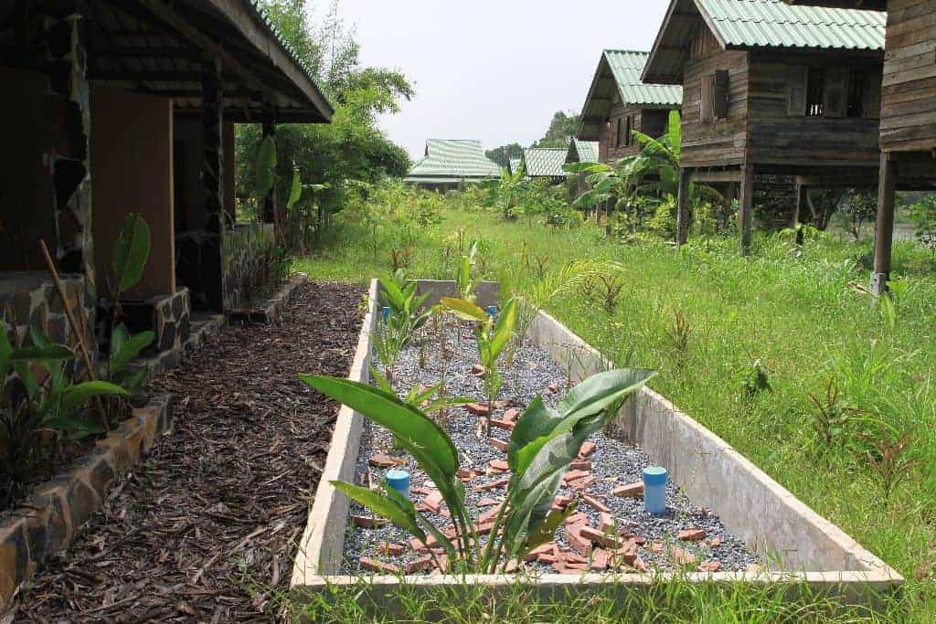 Permaculture Design Course PDC Thailand Bungalow Bathroom Reed Bed 1