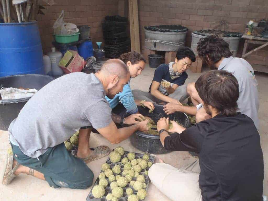 Permaculture Design Course Thailand Homemade Fish Food Balls 41