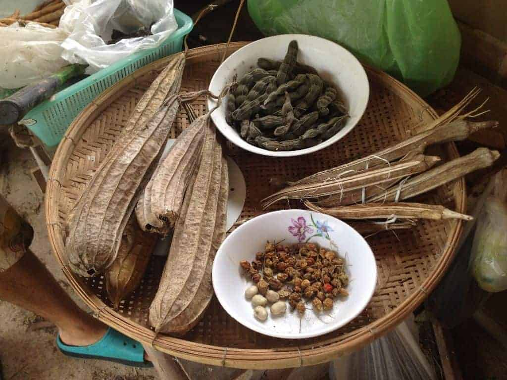 Seed Saving Permaculture Design Course PDC Thailand
