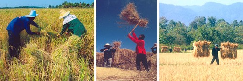 New Theory Farming System in Thailand and Permaculture 3