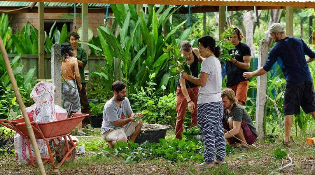 Working in the Nusery at Rak Tamachat Permaculture 1