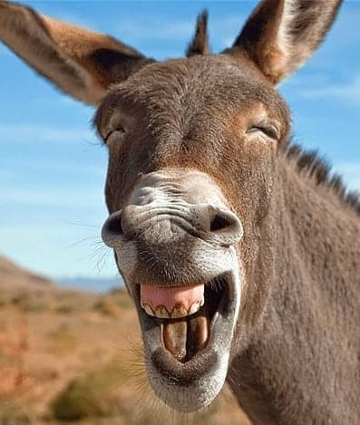 Donkey Smile in Permaculture Design Holistic Management of Animals