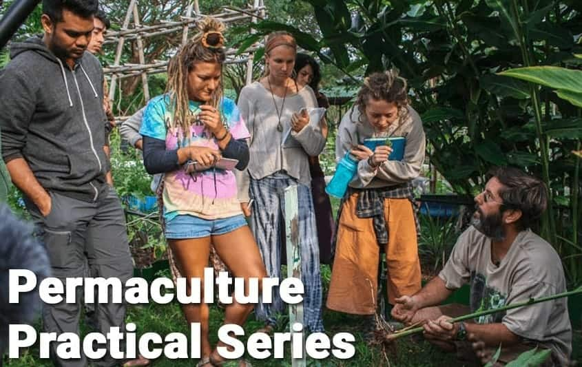 Permaculture Online Course Practical Series with Beau Wickboldt
