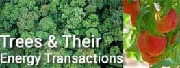 Tree and Their Energy Transactions in Online Permaculture Course