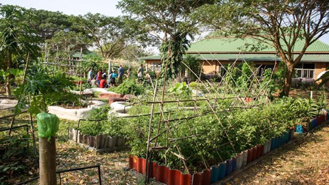 We grow our herbs and vegetables in the Manadala Garden at Rak Tamachat Permaculture Thailand