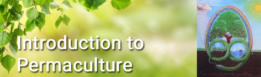 Image for INtroduction to Permaculture